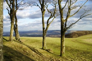 chanctonbury-ring-southdowns