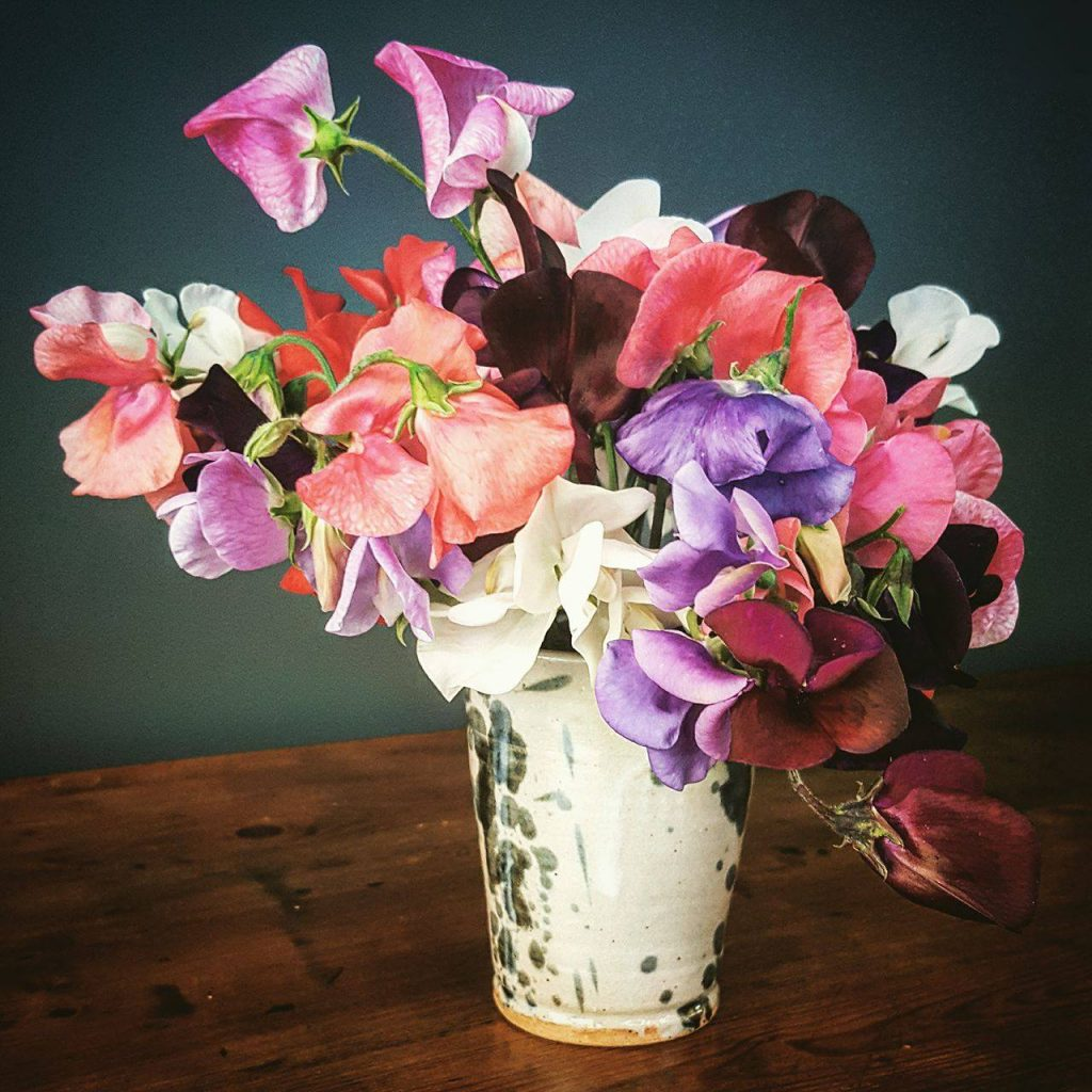 The Girl Who Gardens: Sow Sweet Peas in March for Summer Colour and Scent